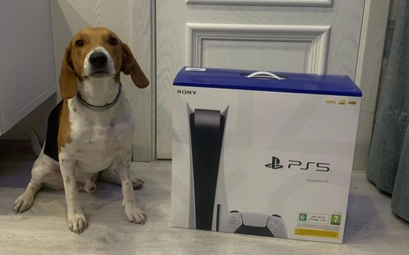 BBC Watchdog расследует пропавшие заказы PS5